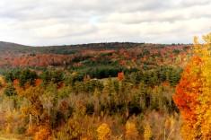 Fall in MA